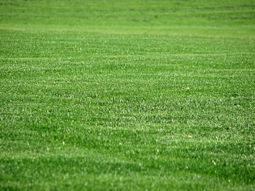 Closeup of a green field