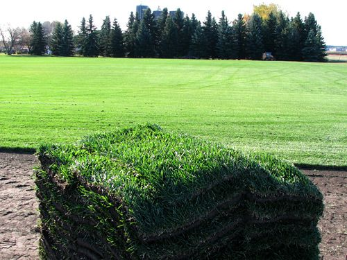 view of sod grass